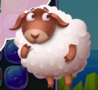Koyunlar Geziyor