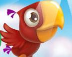 Maceracı Papağan