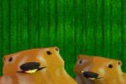 Sincap Avı Oyunu